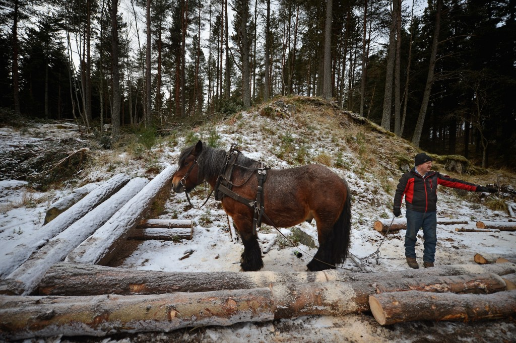 Horse Logging On The Balmoral Estate