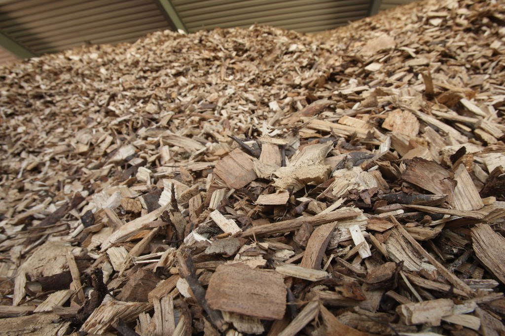 Interest In Bioenergy On the Rise