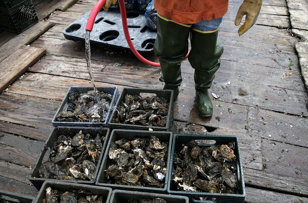 Oyster Farmers Begin To Wind Down Operations After Feds End Nat'l Seashore Lease